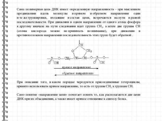 Сама полимерная цепь ДНК имеет определенную направленность - при мысленном продвижении вдоль молекулы впрямом иобратном направлении одни итежегруппировки, входящие всостав цепи, встречаются напути вразной последовательности. При движении в о…