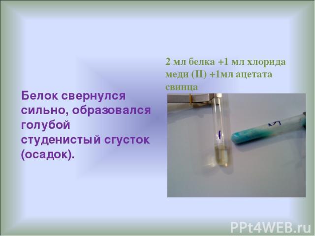Белок свернулся сильно, образовался голубой студенистый сгусток (осадок). 2 мл белка +1 мл хлорида меди (II) +1мл ацетата свинца