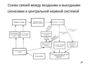 Схема связей между входными и выходными сигналами и центральной нервной системой