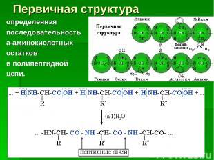 Первичная структура определенная последовательность a-аминокислотных остатков в