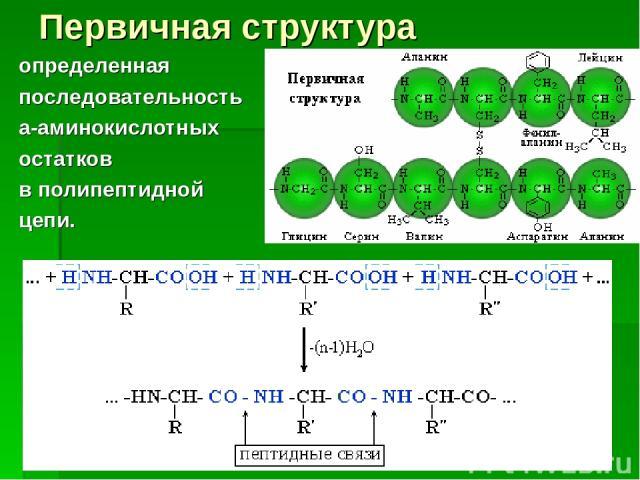 Первичная структура определенная последовательность a-аминокислотных остатков в полипептидной цепи.