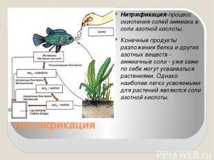 Нитрификация Нитрификация-процесс окисления солей аммиака в соли азотной кислоты