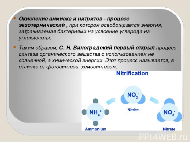 Окисление аммиака и нитритов - процесс экзотермический , при котором освобождается энергия, затрачиваемая бактериями на усвоение углерода из углекислоты. Таким образом, С. Н. Виноградский первый открыл процесс синтеза органического вещества с исполь…