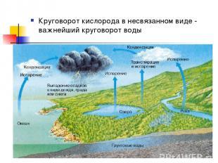 Круговорот кислорода в несвязанном виде - важнейший круговорот воды