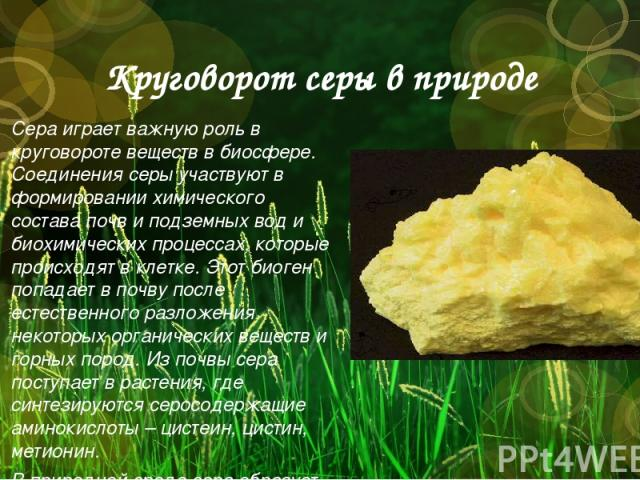 Круговорот серы в природе Сера играет важную роль в круговороте веществ в биосфере. Соединения серы участвуют в формировании химического состава почв и подземных вод и биохимических процессах, которые происходят в клетке. Этот биоген попадает в почв…