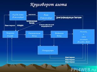 Нитраты в почве Растительные белки Животные белки Аммиак и ионы аммония (в почве