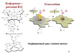 * Гемоглобин Порфириновый цикл, гемовое железо Кофермент – витамин В12