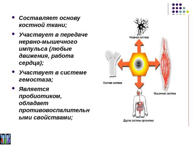 Составляет основу костной ткани; Участвует в передаче нервно-мышечного импульса (любые движения, работа сердца); Участвует в системе гемостаза; Является пробиотиком, обладает противовоспалительными свойствами;