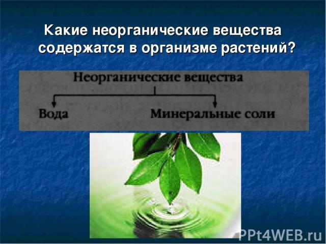 Какие неорганические вещества содержатся в организме растений?