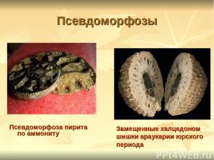 Псевдоморфозы Псевдоморфоза пирита по аммониту Замещенные халцедоном шишки араук
