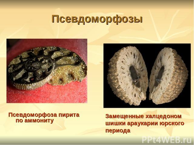 Псевдоморфозы Псевдоморфоза пирита по аммониту Замещенные халцедоном шишки араукарии юрского периода