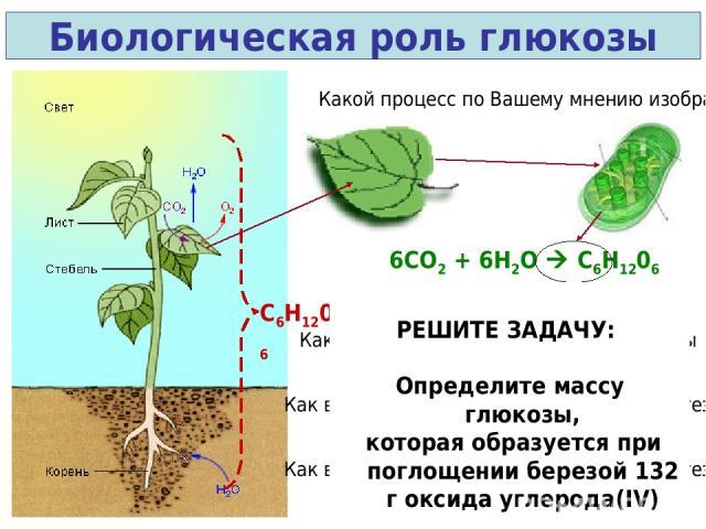 Биологическая роль глюкозы Какой процесс по Вашему мнению изображен? 6СО2 + 6Н2О C6H1206 + 6О2 C6H1206 Как вы думаете каково значение глюкозы для одного дерева? Как вы думаете каково значение фотосинтеза для одного города? Как вы думаете каково знач…