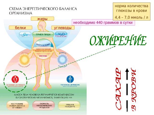 белки углеводы жиры необходимо 440 граммов в сутки норма количества глюкозы в крови 4,4 – 7,0 ммоль / л