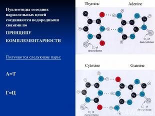 Нуклеотиды соседних параллельных цепей соединяются водородными связями по ПРИНЦИ