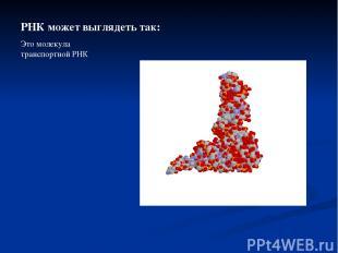 РНК может выглядеть так: Это молекула транспортной РНК