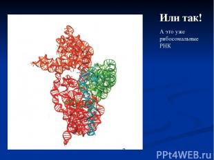 Или так! А это уже рибосомальные РНК