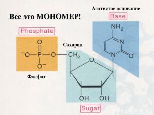 Фосфат Сахарид Азотистое основание Все это МОНОМЕР!