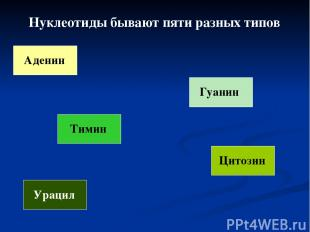 Нуклеотиды бывают пяти разных типов