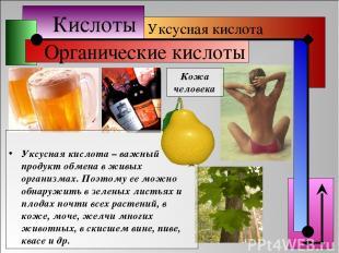 Кислоты Органические кислоты Уксусная кислота Кожа человека Уксусная кислота – в