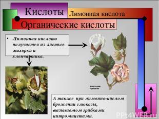 Кислоты Органические кислоты Лимонная кислота получается из листьев махорки и хл