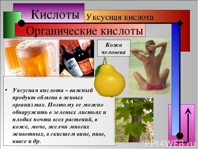 Кислоты Органические кислоты Уксусная кислота Кожа человека Уксусная кислота – важный продукт обмена в живых организмах. Поэтому ее можно обнаружить в зеленых листьях и плодах почти всех растений, в коже, моче, желчи многих животных, в скисшем вине,…