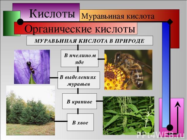 Кислоты Органические кислоты МУРАВЬИНАЯ КИСЛОТА В ПРИРОДЕ В выделениях муравьев В крапиве В хвое В пчелином яде Муравьиная кислота