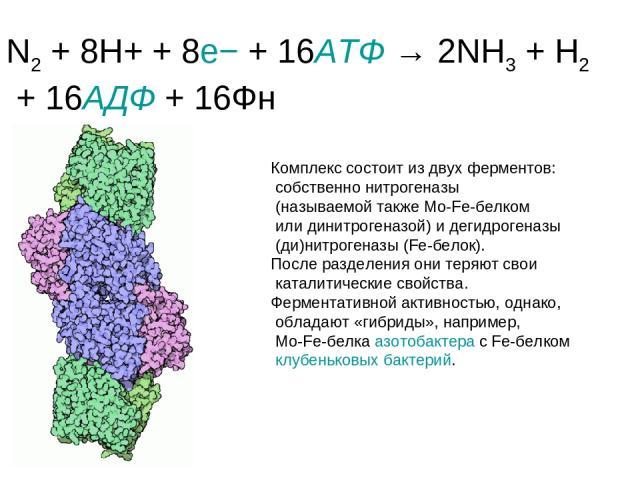 N2 + 8H+ + 8e− + 16АТФ → 2NH3 + H2 + 16АДФ + 16Фн Комплекс состоит из двух ферментов: собственно нитрогеназы (называемой также Mo-Fe-белком или динитрогеназой) и дегидрогеназы (ди)нитрогеназы (Fe-белок). После разделения они теряют свои каталитическ…