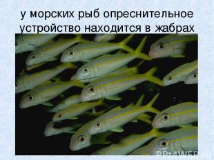 у морских рыб опреснительное устройство находится в жабрах