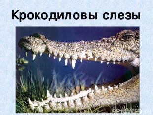 Крокодиловы слезы
