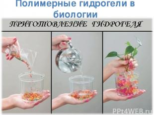 Полимерные гидрогели в биологии *