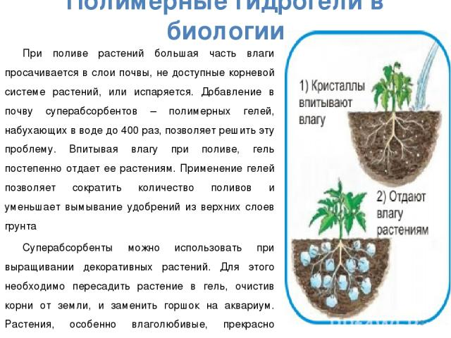 Полимерные гидрогели в биологии При поливе растений большая часть влаги просачивается в слои почвы, не доступные корневой системе растений, или испаряется. Добавление в почву суперабсорбентов – полимерных гелей, набухающих в воде до 400 раз, позволя…