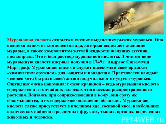 Муравьиная кислота открыта в кислых выделениях рыжих муравьев. Она является одним из компонентов яда, который выделяют жалящие муравьи, а также компонентом жгучей жидкости жалящих гусениц шелкопряда. Это и был раствор муравьиной кислоты. В чистом ви…
