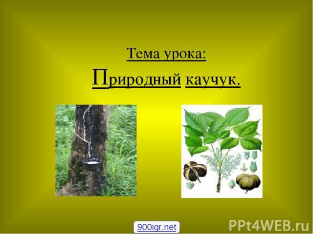 Тема урока: Природный каучук. 900igr.net