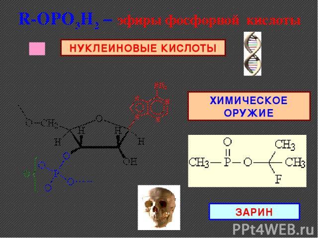 R-ОРO3H2 – эфиры фосфорной кислоты НУКЛЕИНОВЫЕ КИСЛОТЫ ХИМИЧЕСКОЕ ОРУЖИЕ ЗАРИН