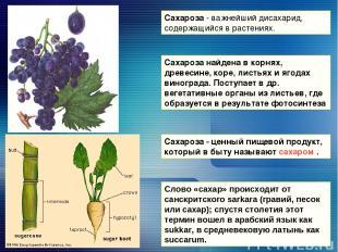 Сахароза - важнейший дисахарид, содержащийся в растениях. Сахароза - ценный пище