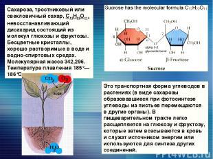 Сахароза, тростниковый или свекловичный сахар, С12Н22О11, невосстанавливающий ди
