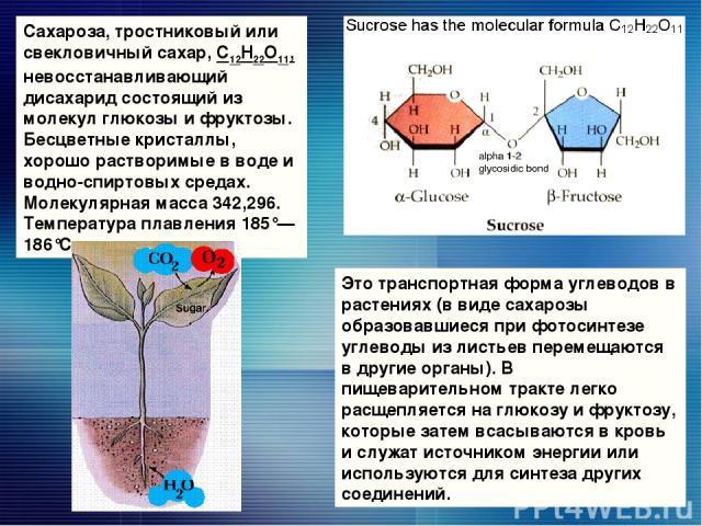 Сахароза, тростниковый или свекловичный сахар, С12Н22О11, невосстанавливающий дисахарид состоящий из молекул глюкозы и фруктозы. Бесцветные кристаллы, хорошо растворимые в воде и водно-спиртовых средах. Молекулярная масса 342,296. Температуpa плавле…
