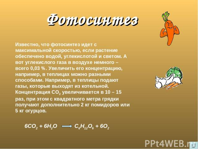 Фотосинтез Известно, что фотосинтез идет с максимальной скоростью, если растение обеспечено водой, углекислотой и светом. А вот углекислого газа в воздухе немного – всего 0,03 %. Увеличить его концентрацию, например, в теплицах можно разными способа…