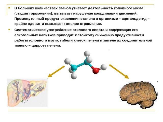 В больших количествах этанол угнетает деятельность головного мозга (стадия торможения), вызывает нарушение координации движений. Промежуточный продукт окисления этанола в организме – ацетальдегид – крайне ядовит и вызывает тяжелое отравление. Систем…