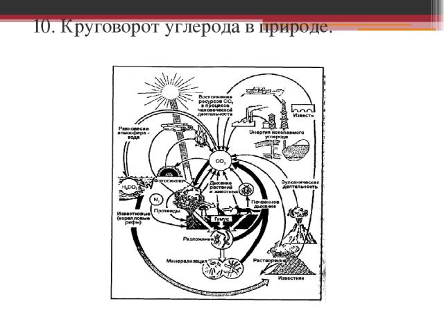 10. Круговорот углерода в природе.