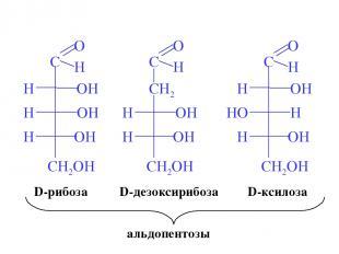 D-рибоза D-ксилоза D-дезоксирибоза альдопентозы