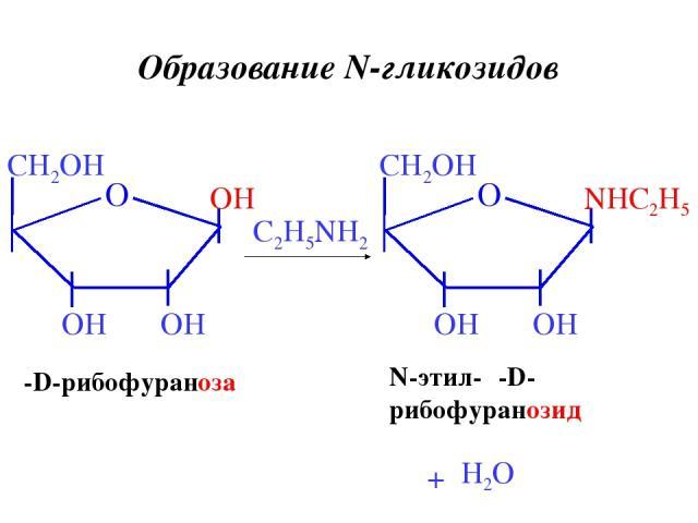 β-D-рибофураноза C2H5NH2 N-этил-β-D- рибофуранозид + H2O Образование N-гликозидов