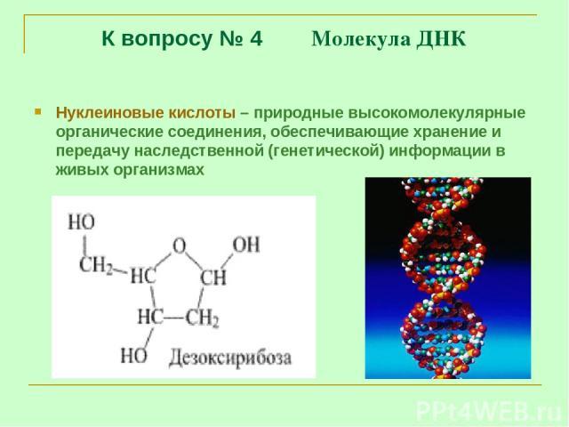 К вопросу № 4 Молекула ДНК Нуклеиновые кислоты – природные высокомолекулярные органические соединения, обеспечивающие хранение и передачу наследственной (генетической) информации в живых организмах