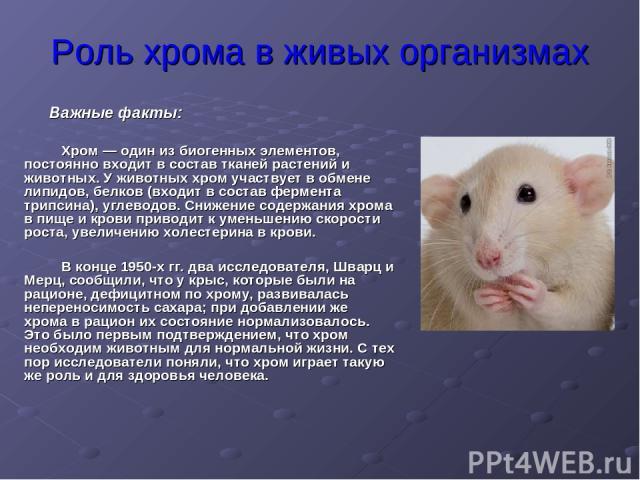 Роль хрома в живых организмах Хром — один из биогенных элементов, постоянно входит в состав тканей растений и животных. У животных хром участвует в обмене липидов, белков (входит в состав фермента трипсина), углеводов. Снижение содержания хрома в пи…