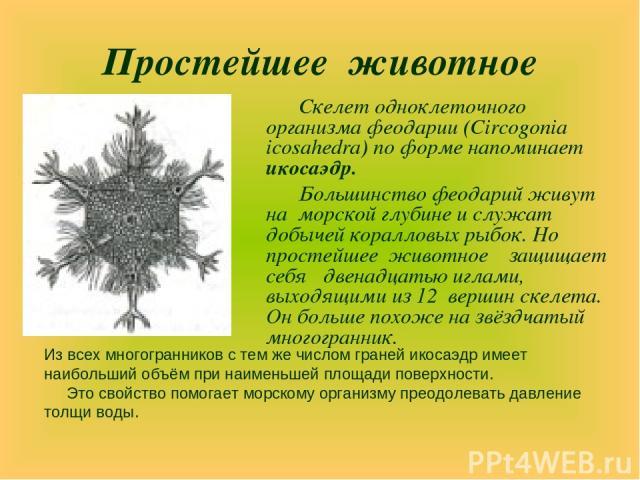 Простейшее животное Скелет одноклеточного организма феодарии (Circogonia icosahedra) по форме напоминает икосаэдр. Большинство феодарий живут на морской глубине и служат добычей коралловых рыбок. Но простейшее животное защищает себя двенадцатью игла…
