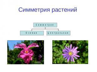 Симметрия растений