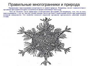 Правильные многогранники встречаются в живой природе. Например, скелет одноклето