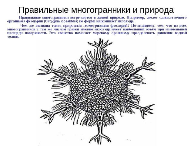 Правильные многогранники встречаются в живой природе. Например, скелет одноклеточного организма феодарии (Circjgjnia icosahtdra) по форме напоминает икосаэдр. Чем же вызвана такая природная геометризация феодарий? По-видимому, тем, что из всех много…