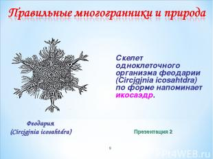 * Скелет одноклеточного организма феодарии (Circjgjnia icosahtdra) по форме напо