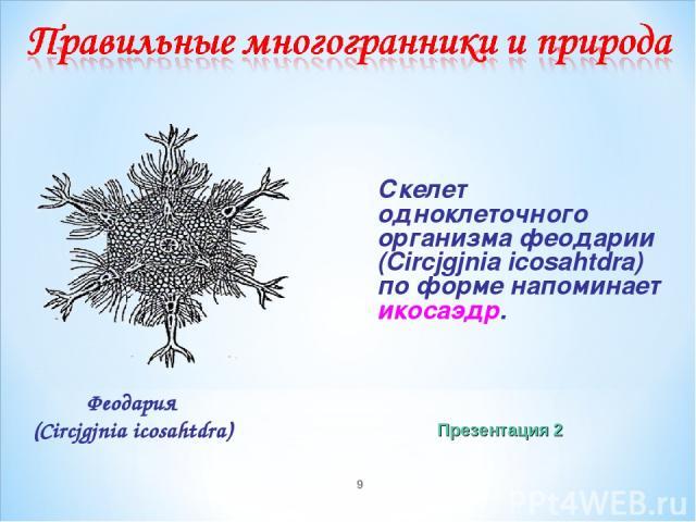 * Скелет одноклеточного организма феодарии (Circjgjnia icosahtdra) по форме напоминает икосаэдр. Феодария (Circjgjnia icosahtdra) Презентация 2